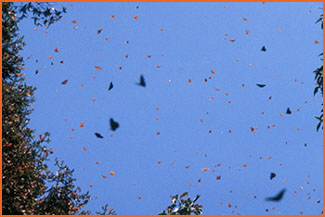 Butterflies in sky