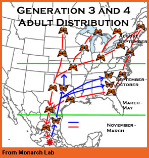 Generation 3 adults map